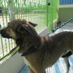 Cão sobrevive após ser jogado de viaduto 2