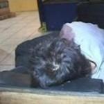 Jovem invade residência, furta objetos e acaba dormindo no sofá