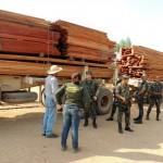 Ibama encontra 4 mil metros cúbicos de madeira ilegal abandonados em MT
