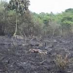 Idoso morre asfixiado após incêndio em chácara em Paranaíta