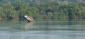 Piloteiro está desaparecido nas aguas do Rio Juruena, região de Bandeirantes