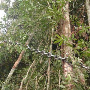 Juiz afirma que uso de 'correntão' na agricultura mato-grossense é legal