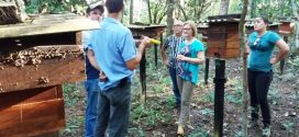 UFMT busca parceria com município para desenvolver projetos de abelhas sem ferrão
