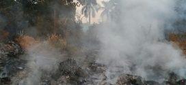 Secretaria de Meio Ambiente de Alta Floresta e Bombeiros no combate ao fogo