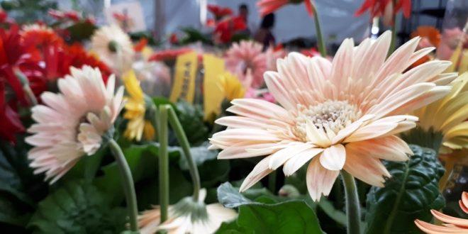 8ª edição da ExpoVerde e Flor tem balanço positivo em Alta Floresta