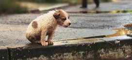 Bazar em prol dos animais de rua será realizado na próxima semana em Alta Floresta