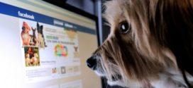 Venda de animais no Facebook passa a ser proibida; usuários poderão denunciar