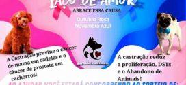 Campanha 'Laço de Amor' está sendo promovida em Alta Floresta em prol a castração de animais de rua