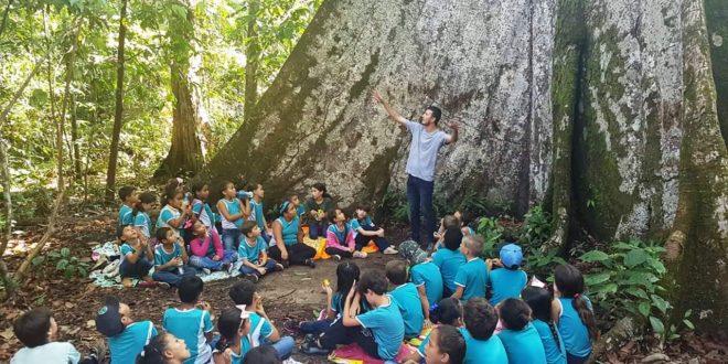 Participando de um projeto de educação ambiental, alunos da Escola Jardim das Flores visitaram recentemente a famosa paineira de Alta Floresta