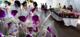 Lions Clube de Alta Floresta iniciou ontem a 9ª Edição da 'Expo Verde e Flor'