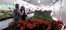 Após sucesso na 9ª Edição da ExpoFlor, Lions Clube irá desenvolver projeto de jardinagem no Lar dos Idosos