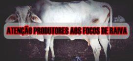Mais dois animais foram diagnosticados com o vírus da raiva em comunidade rural de Alta Floresta