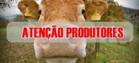 Atenção produtores de Alta Floresta: Focos de raiva foram detectados em gado de comunidade rural