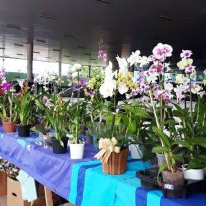 SUCESSO:  Festival de Orquídeas e Rosas do Deserto em prol à APAE encerrou com 'chave de ouro'