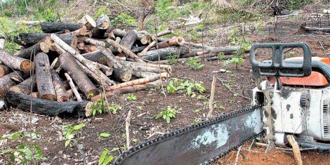 Justiça suspende movimentação de madeira e setor fala em risco de desemprego