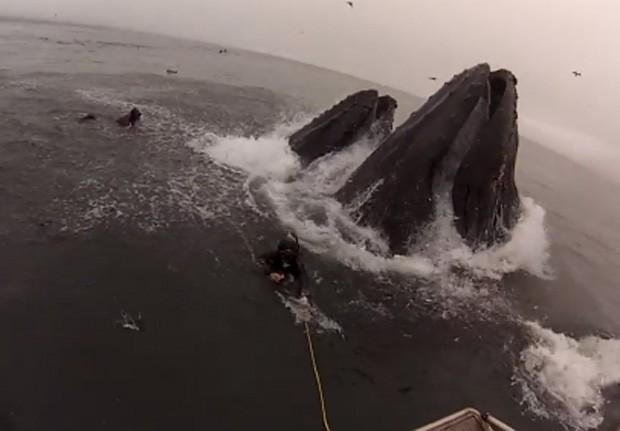 Mergulhadores levam susto