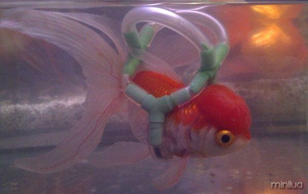 peixe adptado