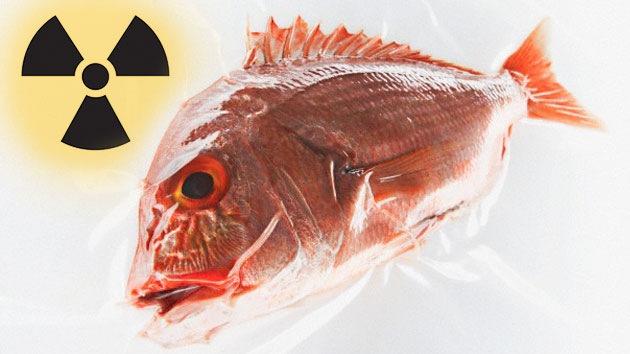 peixe radioativo