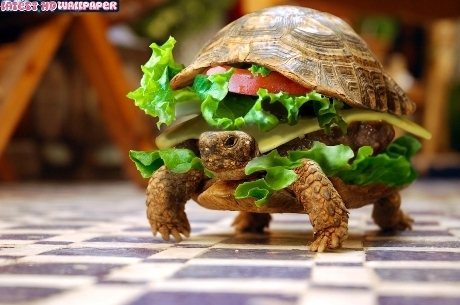 Chinês tenta entrar em avião com tartaruga escondida em hambúrguer