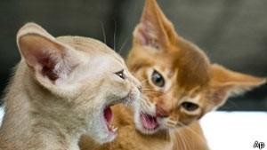 Polícia britânica usa DNA de gato