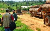 Fiscalização detecta 7 mil hectares de desmatamentos ilegais