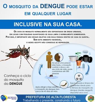 Dengue 2015 02 (5)