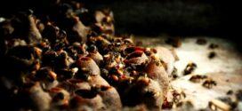 Prefeitura de Alta Floresta investe na criação de melíponas