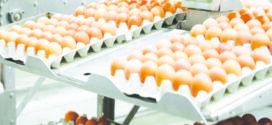 Governo de MT acelera crescimento da avicultura a partir da concessão de incentivos