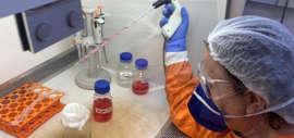 Covid-19: anticorpos de infectados pela 1ª cepa agem contra variante de Manaus