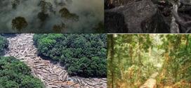 Em Mato Grosso, alertas de degradação da Amazônia aumentam 100%, diz Inpe
