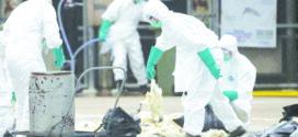 China registra 1º caso em humanos da gripe aviária H10N3