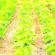 Área de soja deve crescer 3% no Mato Grosso