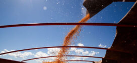 Exportações de milho e soja movimentaram R$ 44 bilhões em MT no primeiro semestre deste ano