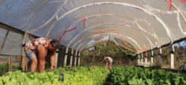 Para período chuvoso, agricultores familiares recebem estufas para cultivo de hortaliças no norte de MT