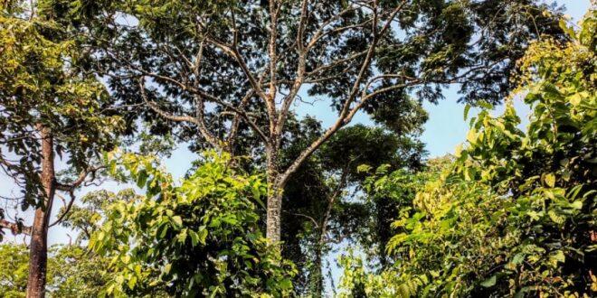 Alta Floresta: Prefeitura faz Estudo para abertura do Parque Zoobotânico