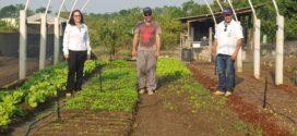 Secretária de Agricultura acompanha em campo atividades de incentivo à Agricultura Familiar
