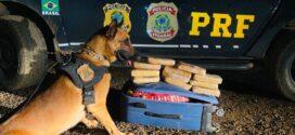 Cão farejador encontra mala com pasta base de cocaína em ônibus em MT e jovem é presa