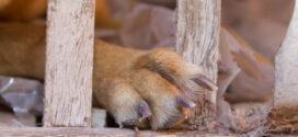 Projeto de lei proíbe pessoa de recobrar guarda de animal vítima de maus-tratos